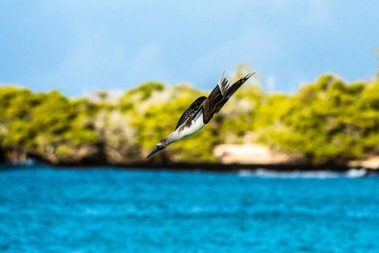 Galapagos: isole in evoluzione