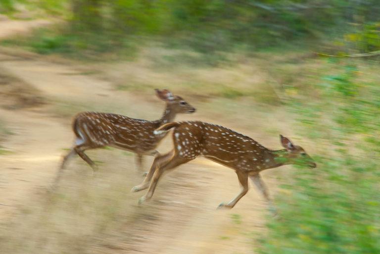 Sri Lanka, safari nel Parco Nazionale di Yala