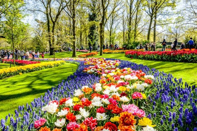 Keukenhof, mosaico di fiori. Omaggio a Piet Mondrian