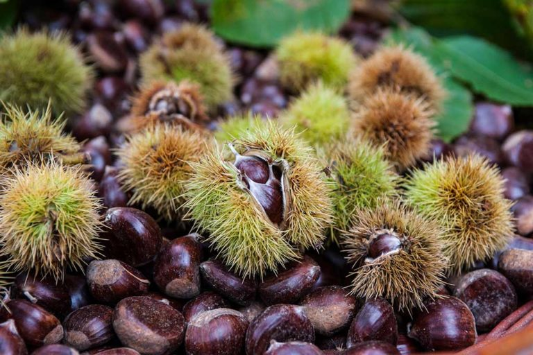 Dal Trentino alla Calabria le sagre festeggiano i prodotti di stagione